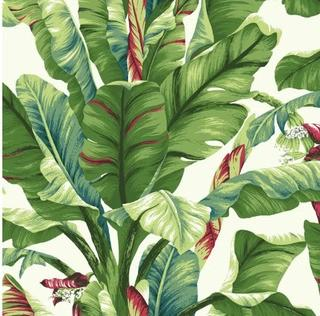 "York Wallcoverings Ashford Tropics 27' x 27 Banana Leaf Wallpaper Roll"" (DOQ1642_15222059) 3 Rolls"